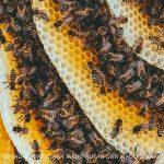 perbedaan madu hutan dan madu asli