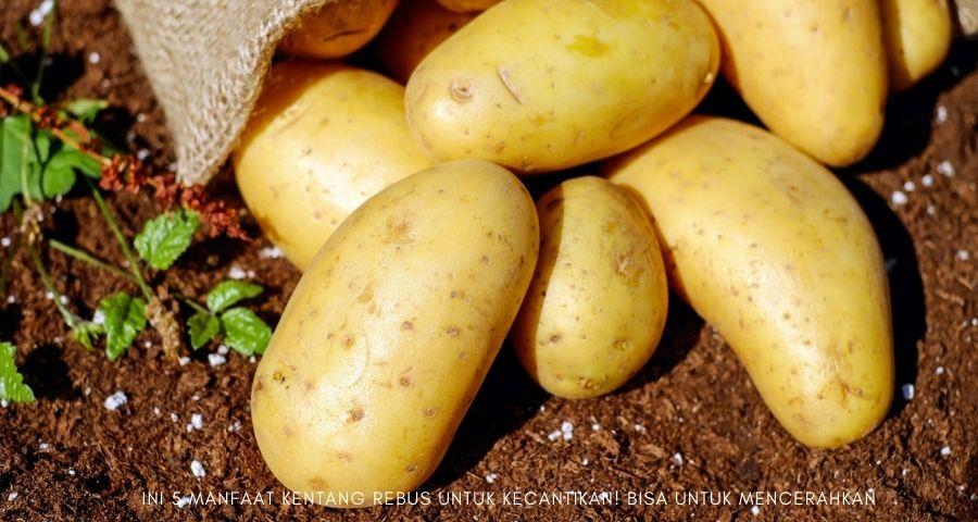 manfaat kentang rebus untuk kecantikan