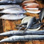tips memilih makanan laut