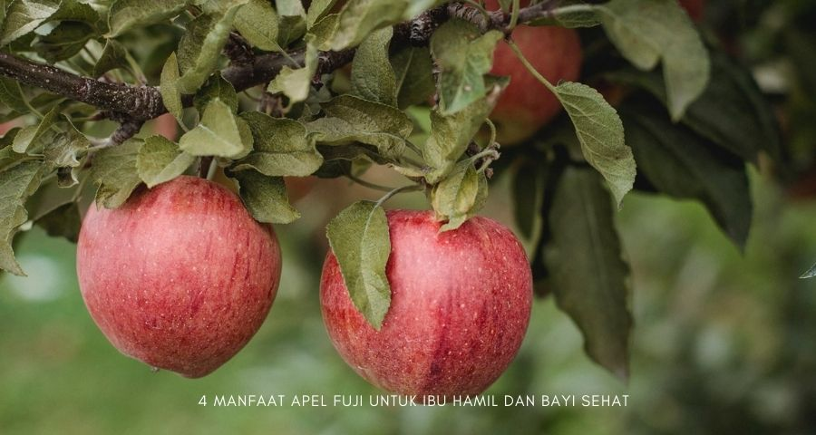 manfaat apel fuji untuk ibu hamil